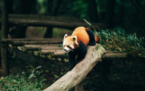 Firefox Announces Secure Contexts Everywhere for New Features