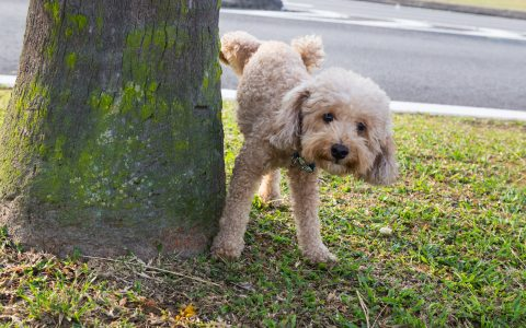 Zombie POODLE and GOLDENDOODLE – Two new exploits found for TLS 1.2
