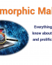 Polymorphic Malware and Metamorphic Malware: What You Need to Know