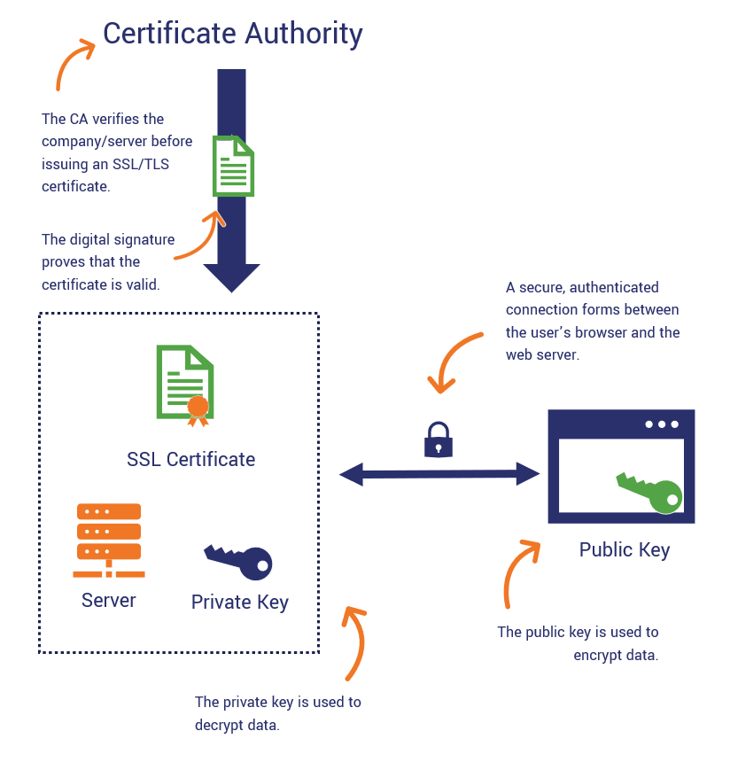 An illustration of the role a certificate authority plays in website security